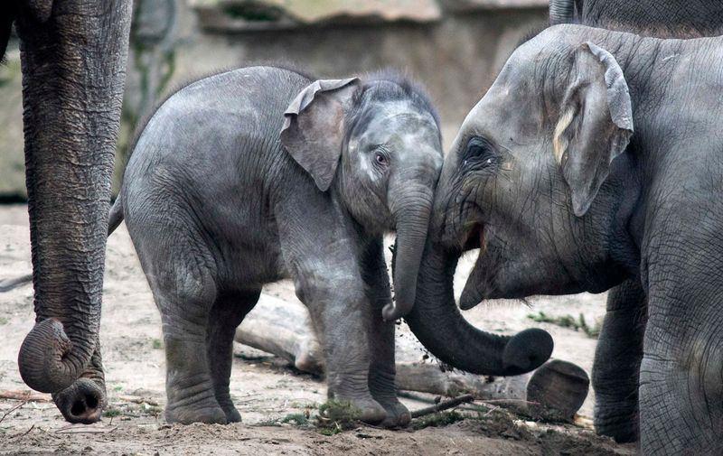 best of Baby elephants Asian
