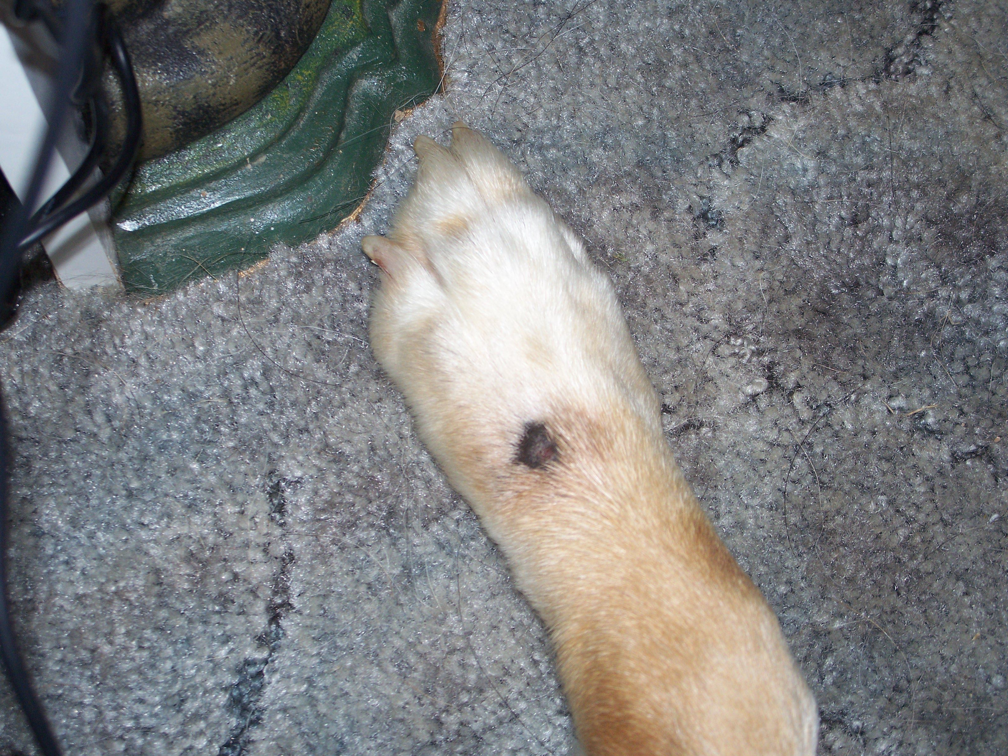 best of From granuloma injury sore lick Canine