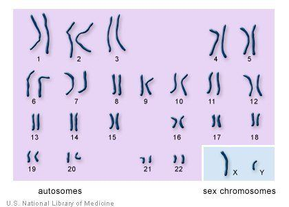best of That babies Chromosone in determines sex