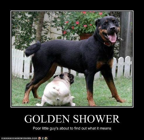 Vams reccomend Golden shower funny pics