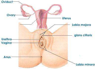 Shower boobs sex porn