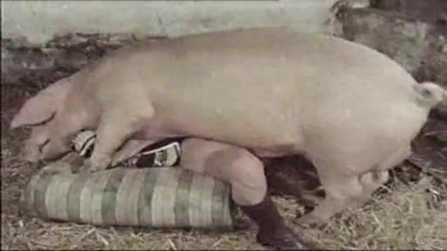 Remarkable, Girl have sex with pig porn not